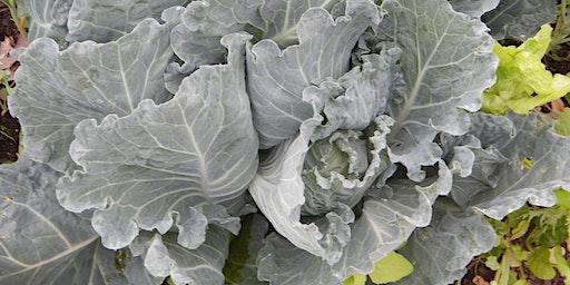 Indoor Seedstarting, Early Season Plantings, & Perennial Vegetables
