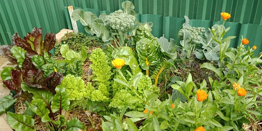 Create and Maintain A Water-Wise Garden