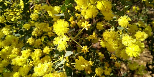 Native Plants for Small Gardens
