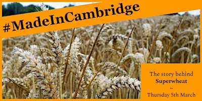 #MadeInCambridge - Superwheat