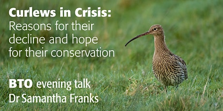 Curlews in Crisis: Reasons for their decline & hope for their conservation tickets