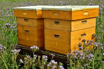 Build a Beehive tickets