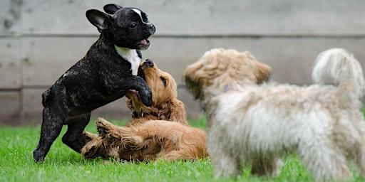 Begeleide speelweide: Puppy's