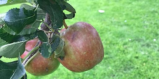 Zetland Park Orchard Maintenance Workshop