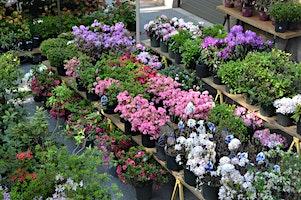 Annual Public Plant Sale
