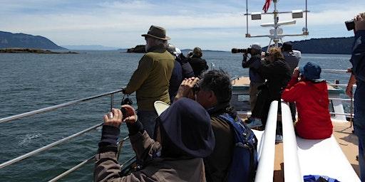 Salish Sea Open Water Birding & Wildlife Cruise, By San Juan Cruises
