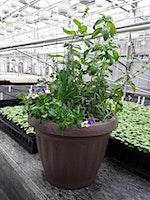 Indoor Edible Planter