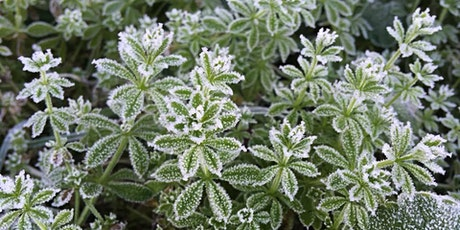 Winter Foraging Class - food in the hard time of year tickets