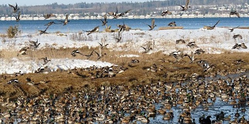 Explore the Geology and the Birds of Birch Bay