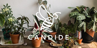 Pop-up plant shop for well-being hosted by Candide and LOOF
