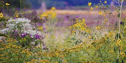 Meadow Management at Kirkwood Preserve