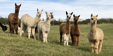 Fully Booked: Introduction to Alpacas - Husbandry and Handling tickets