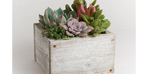 Mini Succulent Garden Woodbox Planter Workshop at Berlin Brewery