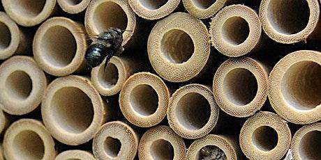 Create a Mason Bee Habitat in your Backyard tickets