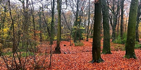 West Midlands, Solihull, Spring Wild Food Foraging Course/Walk tickets