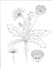 Herb and Stone Series: Dandelion Leaf & Flower tickets