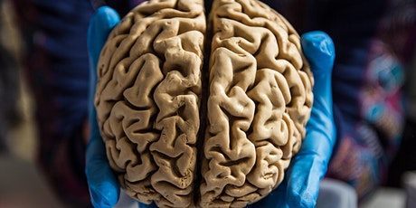 Brain Awareness at BioBus: A Closer Look at the Brain tickets