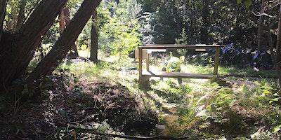 Privet management in the Coups Creek Corridor