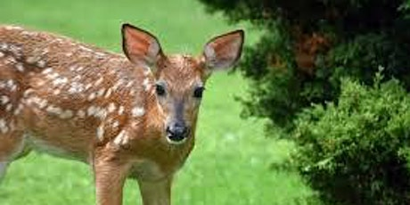 Gardening with Deer -- LIVE EVENT - Presented by Cornell Cooperative Ext tickets