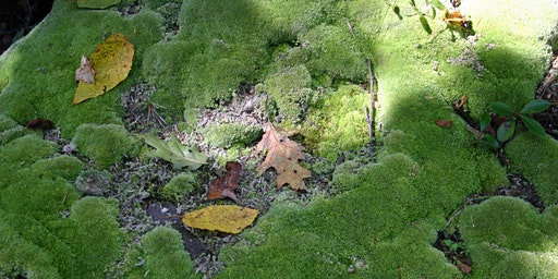 Mosses and Liverworts in the Landscape