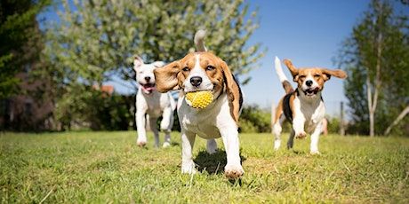 An ADF families event: Dog's day out, Sale tickets