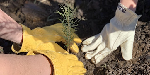 5th Annual Tree Planting Weekend