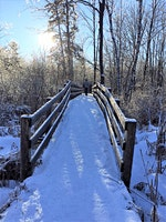 Winter Wonder Forest Bathing Walk