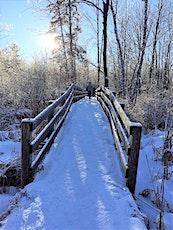 Winter Wonder Forest Bathing Walk tickets