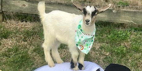 Goat Yoga Nashville- Spring has Sprung tickets