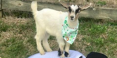 Goat Yoga Nashville- Spring has Sprung