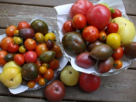Gardening Saturday - Heirloom Tomatoes 101