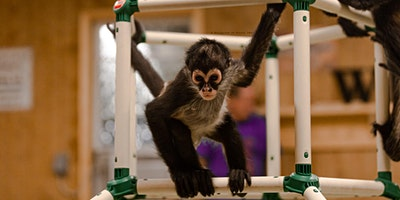 Spider Monkey Playtime Adult only 6 people per se