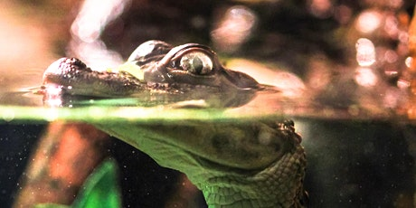 Wildlife Talk - Living With Wildlife - CrocWise - Maryborough Library tickets
