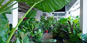 Newcastle - Huge Indoor Warehouse Sale - Jungle Plant...