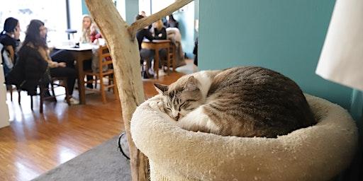 La Città dei Gatti con Davide Cavalieri @Crazy Cat Café