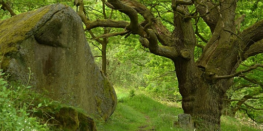 Walking with Trees - with Glennie Kindred