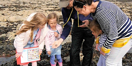 Rock Pool Discovery at Castle Beach tickets
