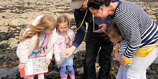 Rock Pool Discovery at Castle Beach