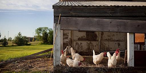Backyard Flocks for Beginners - Adults