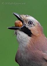 The Birdlife of Astbury Mere tickets