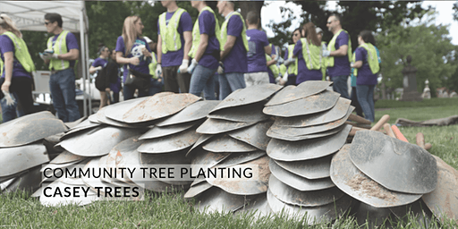 Volunteer: Community Tree Planting - Matthews Memorial Baptist Church