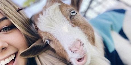 Goat Yoga // Bear Creek Park KELLER, TX // Just for J tickets