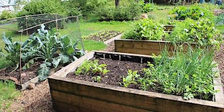 Growing Vegetables in Raised Garden Beds tickets