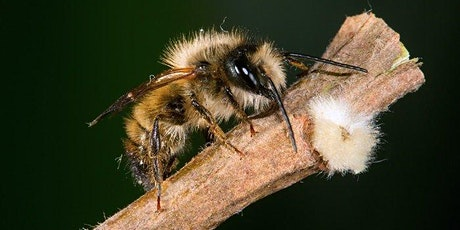Create a Mason Bee Habitat tickets