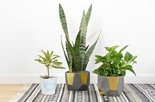 Houseplant Propagation 101