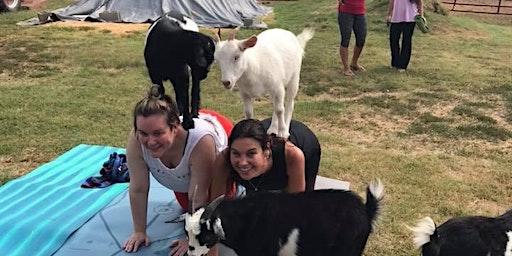 Wine & Goat Yoga: April 4th