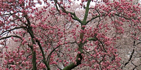 CANCELLED: Spring Fling! Brooklyn: Green-Wood Cemetery Photography & Nature Walk with NYC Wild! tickets