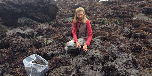 Seaweed: Ecology, Use and Harvest Presentation with Heidi Herrmann 5-6-20
