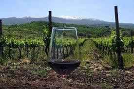 FLY ME TO SICILY: discover Carlo Pellegrino wines, since 1880