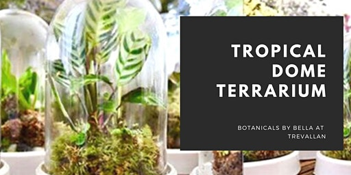 Tropical Dome Terrarium Workshop